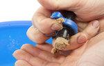 Punch Quick Cone & Bait Mould - Large - Preston