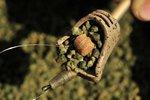 Feederkorven Hybrid Pellet Feeder - Guru